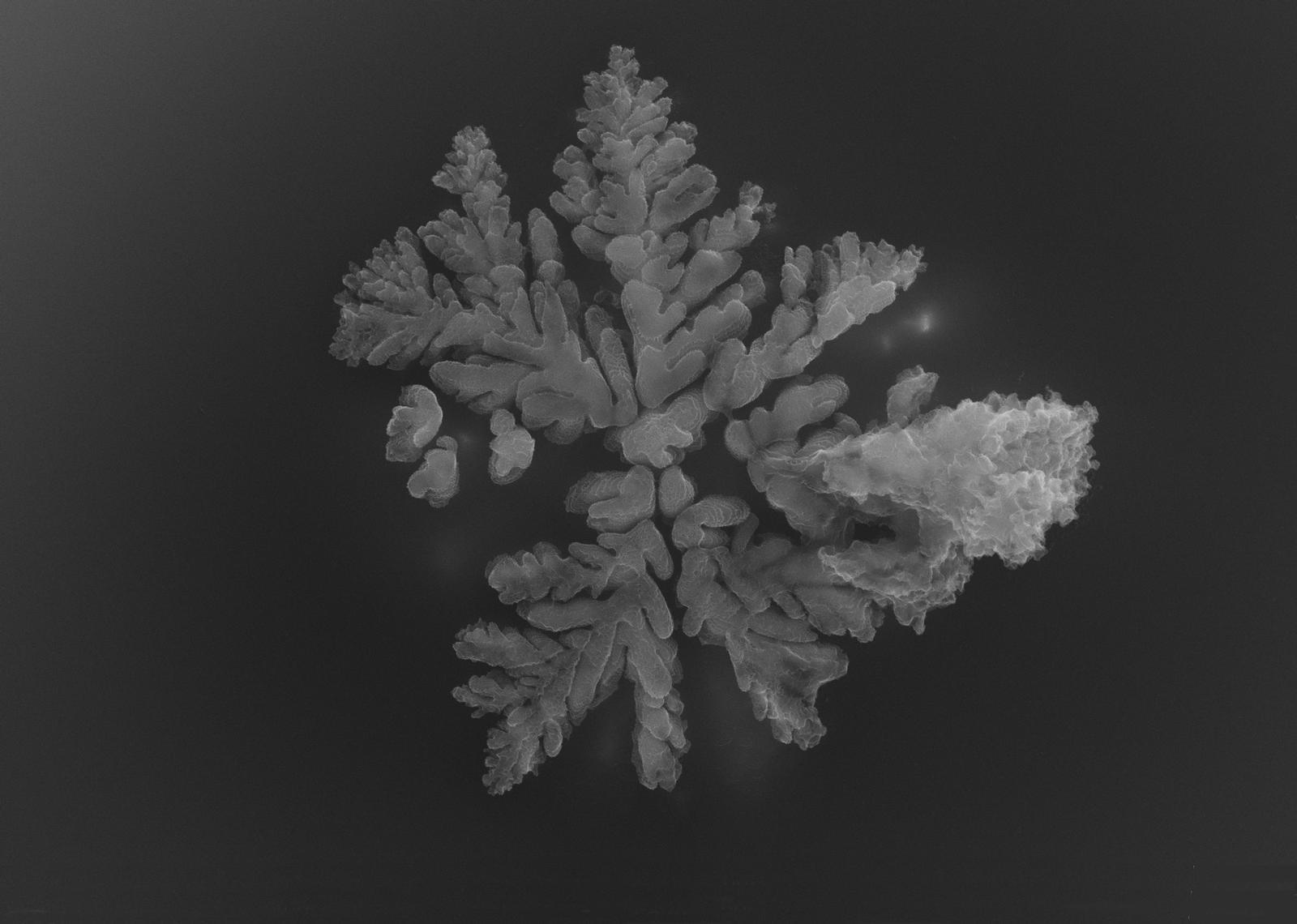 crystalline dendrite