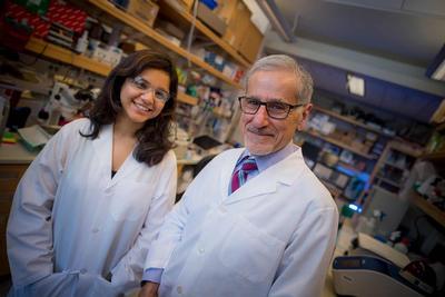 Researchers Uncover Possible Link Between Sleep Apnea and Cardiovascular Disease