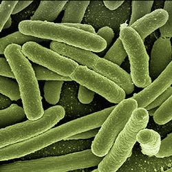Machine learning provides new paradigm in understanding microbial gene regulation