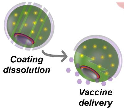 Micromotors deliver oral vaccines