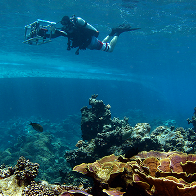 Advanced VR Technology Gives Coral Reefs a Voice